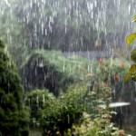 Garten vor Unwetter schützen
